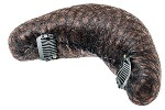 harizma Подкладка для причёсок шатен 165х55мм с клипсами